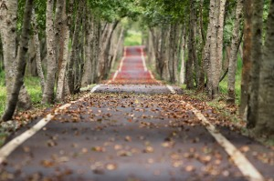 fall, path, walking path, outdoors, hiking, walking trail